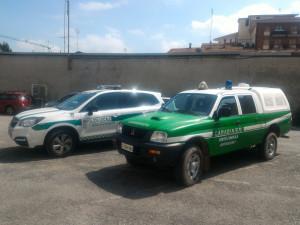 Gatti morti per presunto avvelenamento, proseguono le indagini della Polizia Municipale a Borgo San Dalmazzo