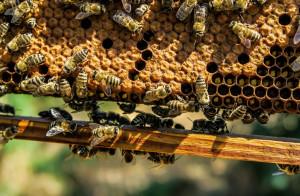 'Preoccupati per la produzione di miele in calo e per la moria di api'