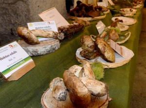 A Ceva i preparativi per la Mostra del Fungo