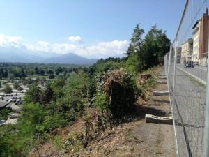 'L'amministrazione ci spieghi le cause della morìa di alberi in città'