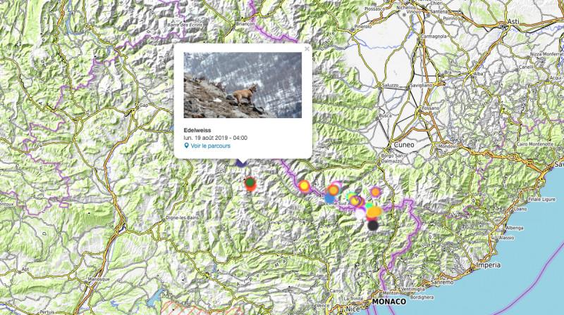 Cartina Italia Interattiva Html.Sul Sito Del Parco Alpi Marittime Una Mappa Interattiva Per Seguire Gli Spostamenti Degli Stambecchi Cuneodice It