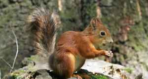 Sabato 14 settembre a Venasca 'La dimenticanza dello scoiattolo'