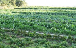 Coldiretti Piemonte: 'E' boom per i prodotti biologici'