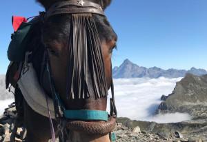 Continua l'estate 'ad alta quota' di Silvano Degiovanni e della sua mula Pioggia
