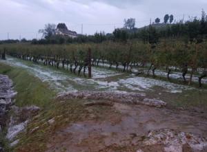 Pioggia, vento e grandine flagellano vigneti e corileti in Langa: l'allarme di Confagricoltura