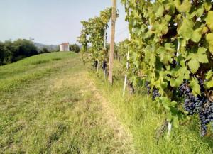 'Passaggi a Settembre': Dogliani 'green & active' con le iniziative dedicate all'outdoor