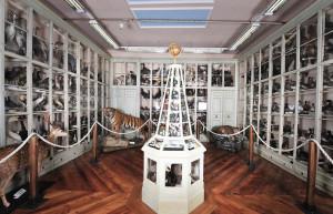 I Musei di Bra nei giorni di Cheese: eventi, multivisione e un compleanno speciale