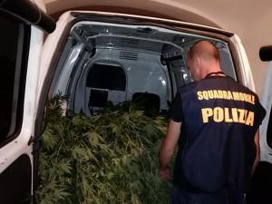 In casa due serre per la produzione di marijuana: arrestati padre (pregiudicato) e figlio