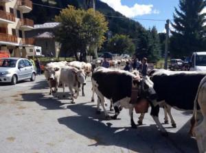 Domenica 15 settembre a Pontechianale c'è 'Ritorno dall'Alpe' (VIDEO)