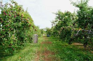 Lavoro nero, sanzioni a un imprenditore agricolo del Saluzzese