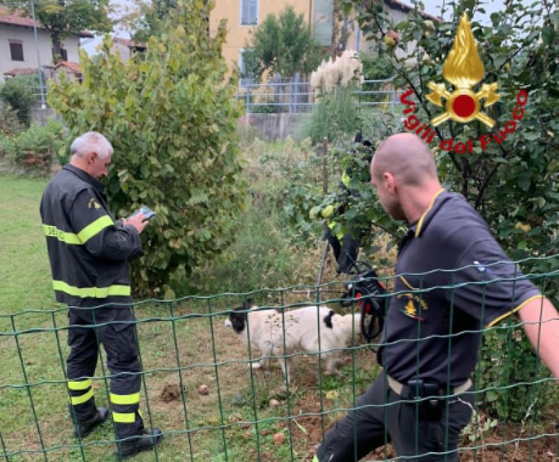Cane resta intrappolato in un tubo, salvato dai Vigili del Fuoco