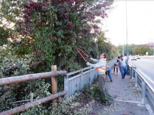 Borgo San Giuseppe, alcuni volontari hanno pulito la pista ciclabile sul ponte di Gesso