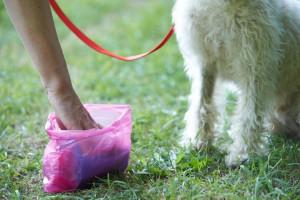 Cuneo, scatta l'ordinanza contro i padroni dei cani 'maleducati': da oggi dovranno essere muniti di attrezzatura per pulire gli escrementi