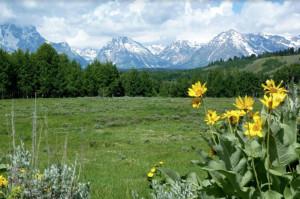 Erbe di montagna e benessere: tre incontri all'Olistik Center di Bra per approfondire le conoscenze