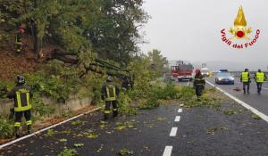 Albero caduto sull'autostrada A6, intervengono i Vigili del Fuoco