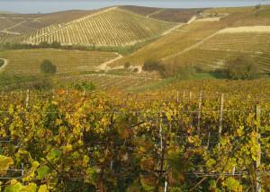 Cambiamenti climatici e agricoltura, un focus sull'innovazione in viticoltura