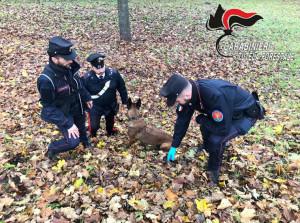 I cani della Forestale di Cuneo a caccia di bocconi avvelenati nell'Astigiano
