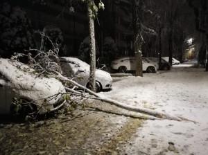 La neve novembrina spezza i rami degli alberi: strade bloccate e auto danneggiate