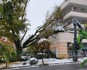 Protezione Civile e Vigili del Fuoco al lavoro per mettere in sicurezza gli alberi pericolanti