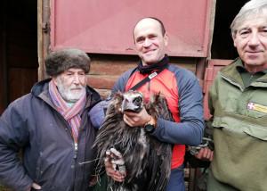 'Intrappolato' sulle alpi Marittime a causa del maltempo, un avvoltoio monaco salvato in valle Stura