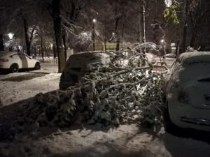 Dopo la nevicata della settimana scorsa... chi risarcisce i danni causati dalla caduta dei rami sulle auto?