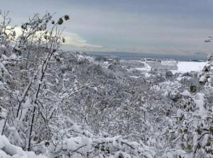 Danni da neve, Confagricoltura sollecita misure per superare l'emergenza