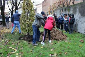 Festa dell'Albero a Bra: venti nuovi alberi nelle scuole cittadine