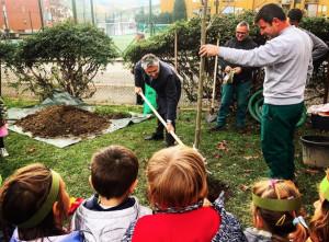 Alba: un nuovo albero donato dal Comune alla Scuola 'Pollicino' per la Festa degli Alberi