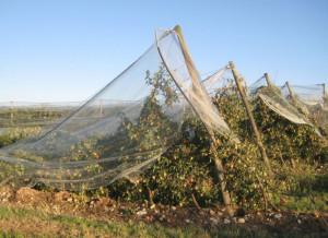 Rimborsi assicurativi, dal 2015 le aziende frutticole e viticole della Granda attendono ancora oltre 6 milioni di euro