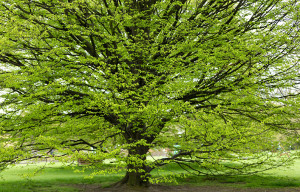 Il gruppo Egea dona 30 alberi ai Comuni cuneesi