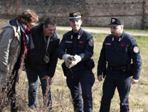 Vittima di un'intossicazione, un falco pellegrino recuperato e liberato dai Carabinieri Forestali di Saluzzo