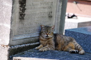 Il Consiglio comunale boccia il 'cimitero degli animali' a Cuneo