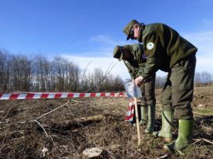 Bosco di pioppi e saliceti tagliato 'a raso': sotto sequestro il terreno nelle campagne di Racconigi