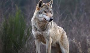 'Bisogna cominciare a studiare una politica per consentire ai pastori di difendersi dai lupi'