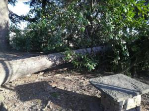 Cerialdo, anche a villa Oldofredi si contano i danni del vento: abbattuto un abete alto 30 metri