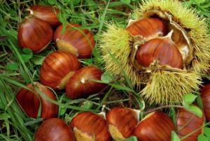 A Barge il convegno 'Castanicoltura da frutto in Piemonte'