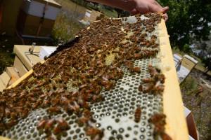 La siccità mette a rischio il miele e le colture 'made in Piemonte'