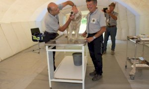 Coronavirus, veterinari volontari danno il loro supporto ai padroni di animali da compagnia in quarantena