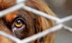 Coronavirus, l'appello del Garante dei diritti degli animali: 'Non abbandonateli'
