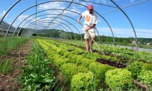 'Le piccole imprese agricole non hanno bisogno di voucher per assumere studenti e cassintegrati'