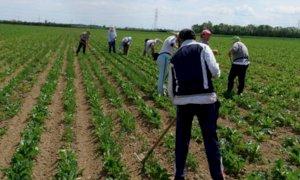 Confagricoltura Piemonte: 'Dignità del lavoro per un'agricoltura etica'