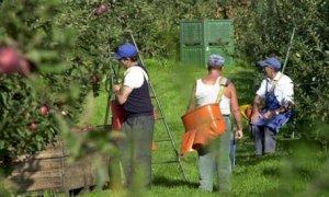 Dalla Regione contributi ai Comuni per l'affitto di strutture abitative per gli stagionali della frutta