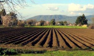 'Manodopera in agricoltura, prima i giovani e i disoccupati'