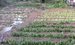 'Gli sconvolgimenti climatici mettono a dura prova l'agricoltura'
