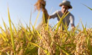'Attivare i voucher agricoli per salvare i raccolti Made in Piemonte'
