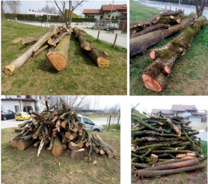 Il Comune di Beinette organizza un'asta di legname: offerte aperte fino al 20 giugno
