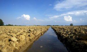 Giornata dell'Ambiente, un appello a preservare la biodiversità del 'made in Piemonte'