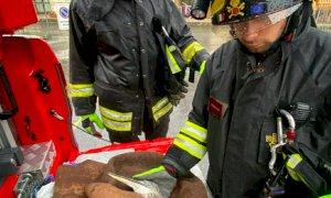 Costigliole Saluzzo, i Vigili del Fuoco soccorrono un airone ferito