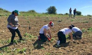 """""""Agricoltura sociale: un modello innovativo di sostenibilità"""""""