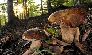 Raccolta funghi, ecco dove richiedere i permessi nei parchi delle Alpi Marittime e del Marguareis
